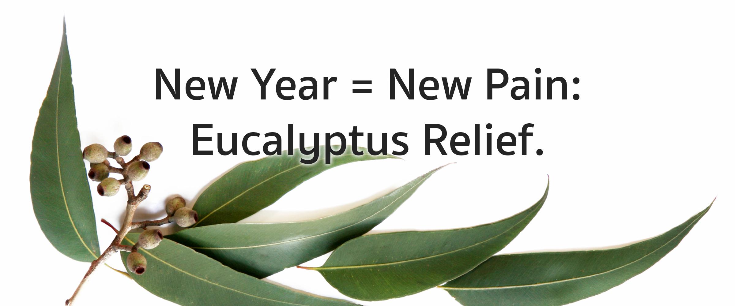 eucalyptus-feature